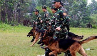 ĐT Huấn luyện chó nghiệp vụ giành kết quả đáng khen
